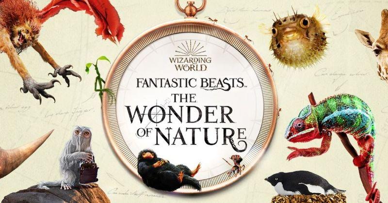 برگزاری نمایشگاهی از جانوران شگفتانگیز دنیای هریپاتر در موزهی تاریخ طبیعی لندن