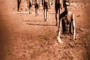 فیلم «سایههای سنگین کلاغ» به دو جشنواره برزیل و کانادا راه یافت